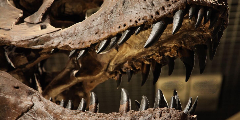 Tudo Sobre Os Dinossauros · Saiba Mais 124c0ba503e
